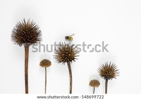 Small bee landing on row of dried seed pods - Shutterstock ID 548699722