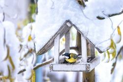 small bird on feedbox close up