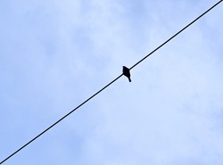 Small Bird Silhouetes in Electric Cable