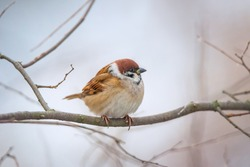 Small bird sparrow sitting on tree branch on nature background