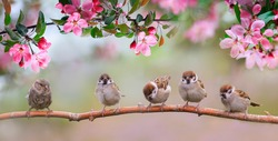small birds sparrows sit on a branch with flowers in the May sunny garden
