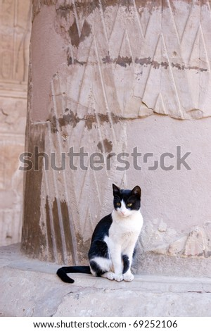 Small black and white cat resting on a pillar at the Ancient Egyptian Temple of Horus, Edfu, Egypt.