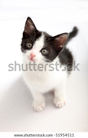 small, black and white kitten look up into the camera - cutout
