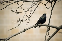 small black bird on a twig // natural background