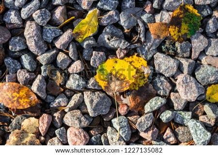 Small black, white and red pebble background with autumn yellow fall leaves. Top view of contrast gravel stone texture #1227135082