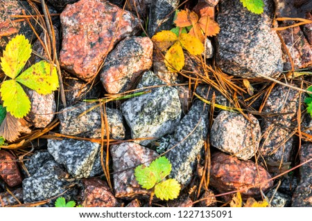 Small black, white and red pebble background with autumn yellow fall leaves. Top view of contrast gravel stone texture #1227135091