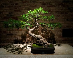 Small bonsai tree lit from above.