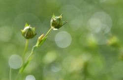 Small boxes with green seeds on a background of delicate bokeh