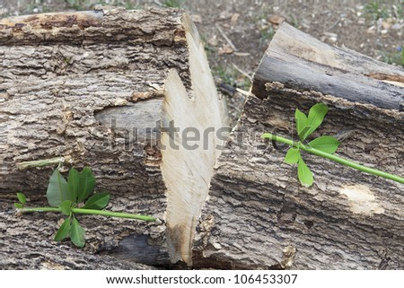 small branch germinate from a cut down log