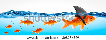Small Brave Goldfish With Shark Fin Costume Leading Others - Leadership Concept #1308386599