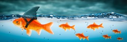 Small Brave Goldfish With Shark Fin Costume Leading Others Through Stormy Seas - Leadership Concept