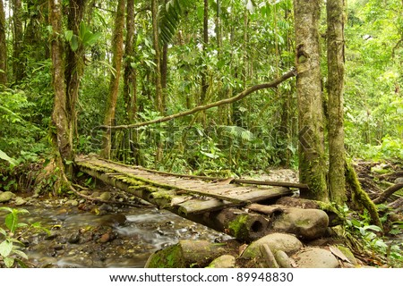 SMALL BRIDGE IN THE ECUADORIAN JUNGLE MADE FROM WOOD, THE ONLY MATERIAL AVAILABLE IN THIS AREA