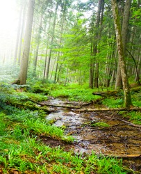 small brook flow throug the green forest, summer outdoor scene
