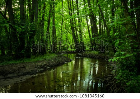 Small brook in forest. Peaceful brook in early spring forest.