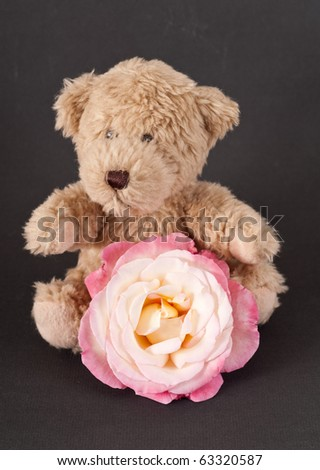 Small Brown Bear with White and Pink Rose
