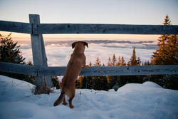 Small brown dog stands on a wooden fence above the clouds on a summit in winter. Hiking with dogs.
