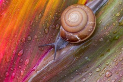 Small brown snail on green leaf,Snail crawling on leaf,Abstract drops of water on flower leaf,Africa, Thailand, Animal, Animal Shell, Animal Wildlife