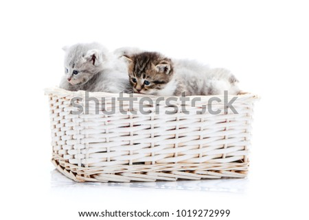 Small brown striped fluffy blue-eyed kitten sitting among other cute grey kitties in white wicker basket while posing for photoset. Little newborn gray charming adorable kitties cuteness happiness - Shutterstock ID 1019272999