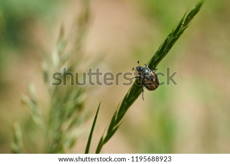 Stock Photo Small bug climbing green grass on sunny day, blurred background, bokeh