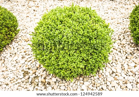 small bush - nice background