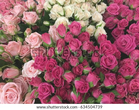 Small Bush Roses Small Pink Roses Shabby Roses Background Ez Canvas