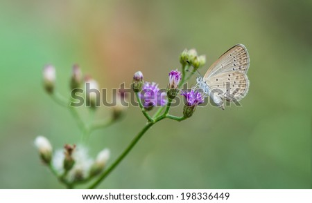 small butterfly seeking nectar on a flower #198336449