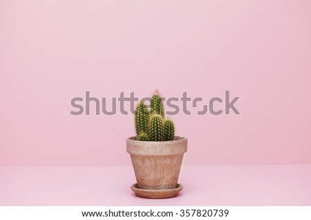 Small cactus in a flowerpot on a pink background #357820739