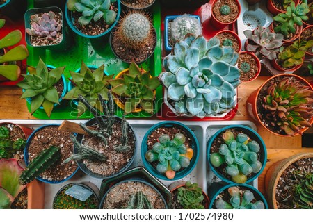 Small cactus in different pots