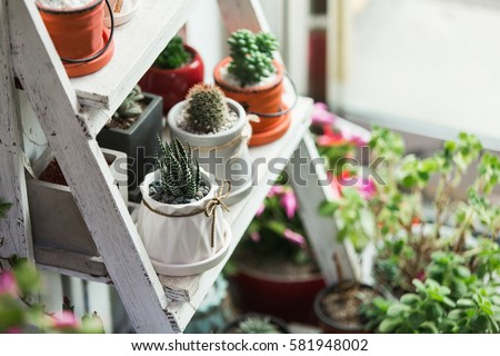 Small cactuses and succulents at the flower shop #581948002