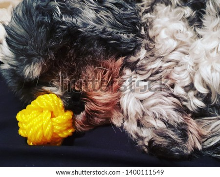 Small canine creature rests nose on monkey paw knot #1400111549