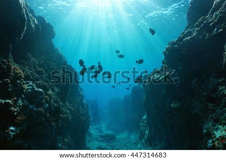 Small canyon underwater carved by the swell into the fore reef with sunlight through water surface, Huahine island, Pacific ocean, French Polynesia #447314683
