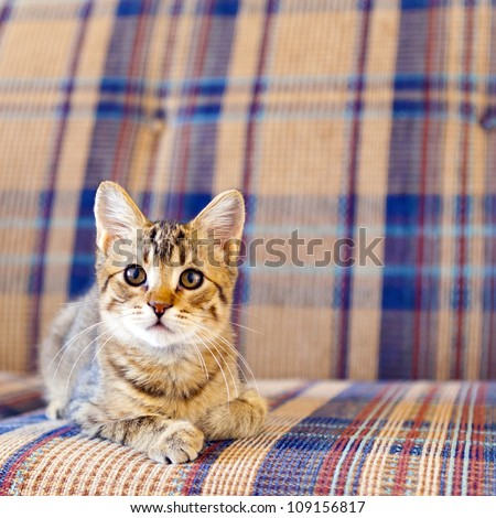 Small Cat - stock photo