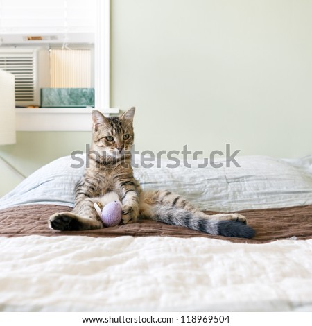 Small Cat in the bed