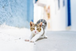 Small cat looking and relaxing to tourists and says hello to new visitors in the streets of a greek mediterranean small village town, Dodecanese, Nisyros Island, Greece