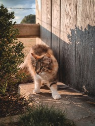 Small cat on a farm