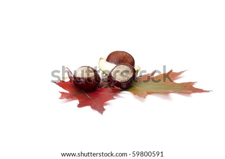 Small chestnuts and leaves isolated on a white background.