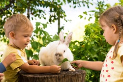 Small children kids feed large white rabbit sitting on a tree stump in garden in summer. Hare in wild meadow gnaws and eats gree grass in spring. Animal, environmental protection, farm easter concept