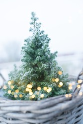 Small christmas tree with magical golden bokeh and frosty branches in a basket. Background for christmas time. Vertical close-up with short depth of field.