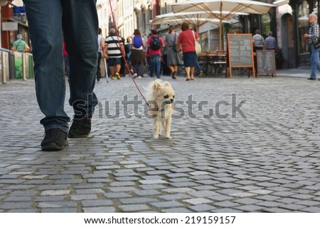 Small city dog, chihuahua, walking in a busy pedestrian city center
