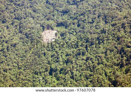 Small clearing made by colonists in tropical rainforest, Ecuador
