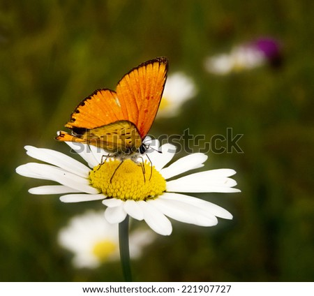 Small, colorful, beautiful butterfly on a dried plant with natural background