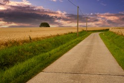 Small concrete road meanders between golden wheat fields under a dramatic summer sky at sunset in Kortenaken, Flemish Brabant, Flanders, Belgium