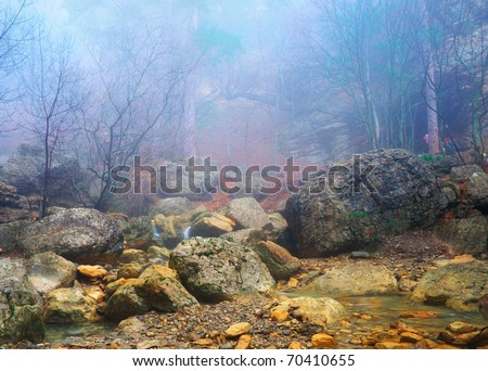 Small creek and wood in dense fogs