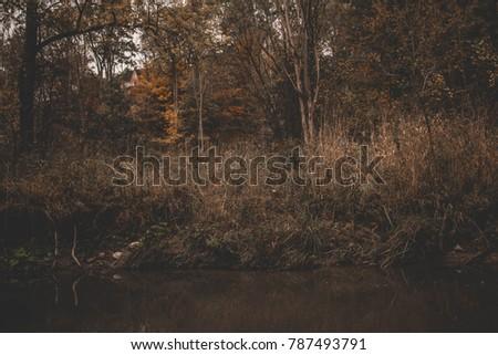 small creek calmly flowing thru ...