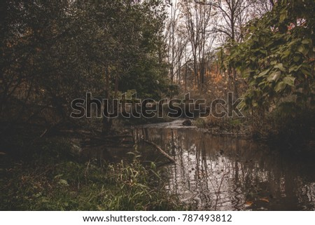 Small Creek Calmly Flowing Thru the Fall Forest: Ontario Canada: Fall 2017