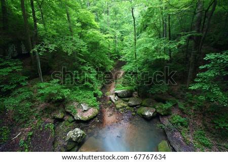 Small creek flows through a deep gorge of Alabama