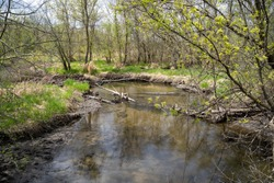 Small creek running through Elm Creek Park Reserve in Maple Grove Minnesota during springtime