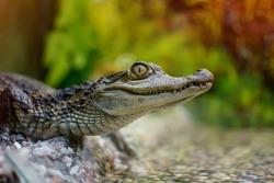 small crocodile in a zoo