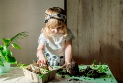 small cute girl watering indoors plants at home. Transplanting and caring for exotic indoor plants, planting seedlings.Soil, ground and green sprouts on a wooden table, seeds.Selective focus