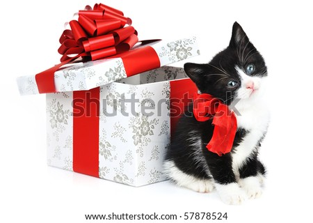 small cute kitten near gift box - stock photo